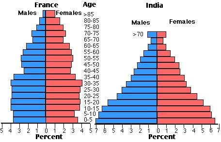 文--比较法意年龄结构图1