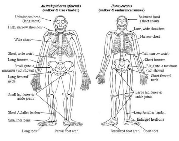 人的身体结构图及名称-人体构造图